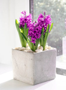 Square cement planter with pink hyacinth, created by North London florist Garland